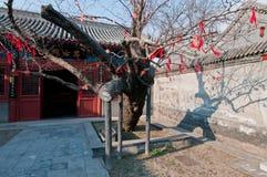 Wen Tianxiang temple Royalty Free Stock Image
