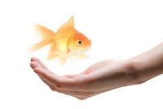 Wenden Sie Sorgfalt über Fische an Lizenzfreie Stockbilder