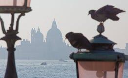 Wenecja - gołąbka i Santa Maria della salutu kościół Obraz Royalty Free
