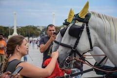 Wenen, Oostenrijk, 15 September, 2019 - nTourist die beelden nemen en nCarriagepaarden van in Schonbrunn strelen royalty-vrije stock fotografie