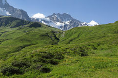 Wengen Jungfrau and Jungfrau peaks of Swiss Alps on the way to Kleine Scheidegg Royalty Free Stock Image