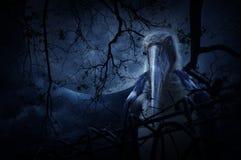 Wenig Adjutantstorchvogel mit altem Zaun über totem Baum Stockfotografie