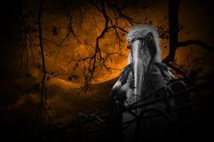 Wenig Adjutantstorchvogel mit altem Zaun über totem Baum, moon a Lizenzfreie Stockfotografie