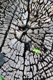 Wenig Anlage wachsen auf altem Baum Lizenzfreies Stockbild