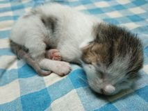 Wenig Baby Cat Sleeping Picture lizenzfreies stockfoto