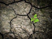 Wenig Baum überleben auf Trockensubstanzboden lizenzfreies stockfoto