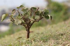 Wenig Baum Stockfoto