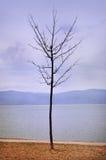 Wenig Baum Stockbild