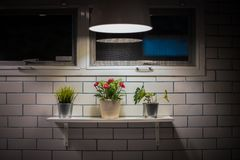 Wenig Baum und Lampe zwischen der Wand im Hausdesign Lizenzfreie Stockfotografie