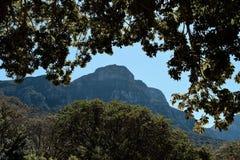 Wenig Berg, der durch die Bäume emporragt Lizenzfreie Stockfotografie