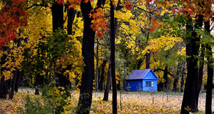 Wenig blaues Haus, großer Autumn Leaves Stockfotografie
