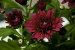 Wenig Blume Stockbild