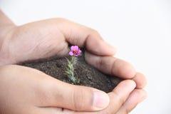 Wenig Blume auf weniger Hand mit weißem Hintergrund Stockfotografie