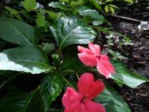 Wenig Blume in der Natur stockbilder