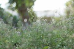 Wenig Blume im Garten Stockfoto