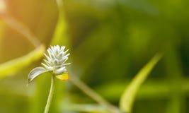 Wenig Blume morgens nach Regen Lizenzfreies Stockbild