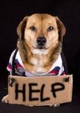 Helfender Hund lizenzfreie stockfotos