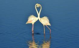 Wenig Flamingo Stockfotos