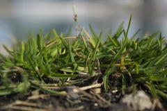 Wenig Flecken auf Gras auf einer Bank von Donau lizenzfreie stockbilder