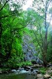 Wenig Fluss im Wald Stockfotos