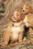 Wenig Flusshundeprofil Lizenzfreie Stockfotografie