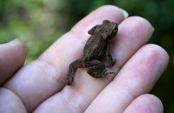 Wenig Froggy lizenzfreies stockbild