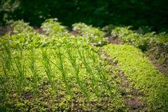 Wenig Garten Stockfotos
