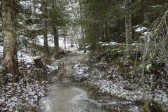 Wenig gefrorener Strom in einem Wald Lizenzfreie Stockfotografie