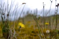 Wenig gelbe Blume im wilden Stockbild