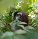 Wenig Gesicht des Affekindes im Mutterpelz Lizenzfreie Stockfotos