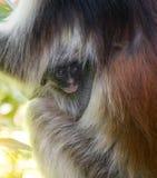 Wenig Gesicht des Affekindes im Mutterpelz Stockfotos