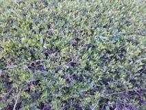 Wenig grüne Blätter auf Morgen Lizenzfreie Stockfotografie