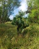 Wenig grüner Kaktus lizenzfreies stockbild