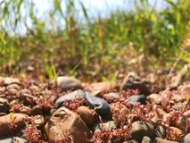 Wenig Gras mit Steinen stockfotografie