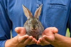 Wenig graues Kaninchen, das auf seinen Händen sitzt lizenzfreie stockbilder
