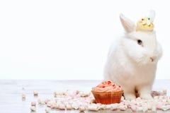 Wenig Häschen, das durch den kleinen Kuchen sitzt Lizenzfreie Stockfotografie