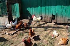 Wenig Hühnerbauernhof im Yard stockfotografie