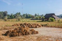 Wenig Hütte auf dem Reisgebiet Lizenzfreies Stockbild