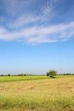 Wenig Hütte auf dem Reisgebiet mit Hintergrund des blauen Himmels Stockbild