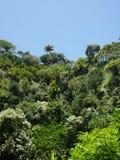 Wenig Haus mitten in dem Dschungel Lizenzfreie Stockfotos