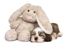 Wenig Havanese-Welpe, der mit einem Kaninchenplüschspielzeug schläft Lizenzfreie Stockfotos