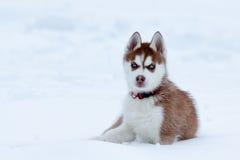 Wenig heiser mit den blauen Augen, die im Schnee sitzen Stockbild