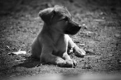 Wenig Hund erhält von den Strahlen der Sonne warm lizenzfreie stockfotografie