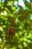 Wenig Insekt, das zur Baumspitze klettert stockbild