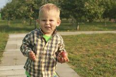 Wenig Junge, der rote Äpfel im Obstgarten isst stockfotos