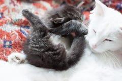 Wenig Kätzchenlügen umgedreht Lizenzfreie Stockfotos