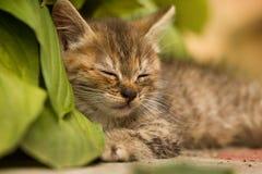 Wenig Kätzchenschlafen Lizenzfreie Stockfotos