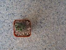 Wenig Kaktuspflanze im orange Topf auf Steinhintergrund Stockfotos