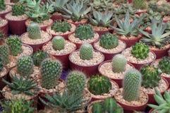 Wenig Kaktuspflanzen Lizenzfreies Stockfoto