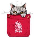 Wenig Katze in der Tasche lizenzfreie abbildung
